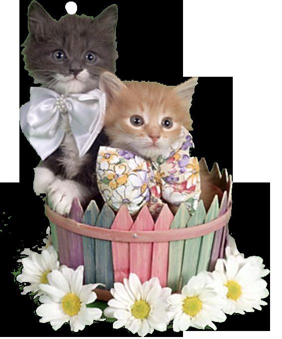 1 Березня - міжнародний день котів!