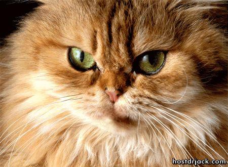 1 Березня - Всесвітній день кішок