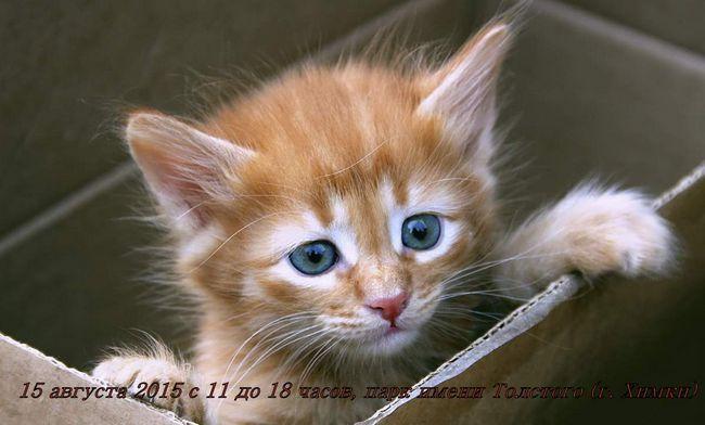 15 Серпня о хімках пройде виставка собак і кішок «пухнасті лапки шукають дім»
