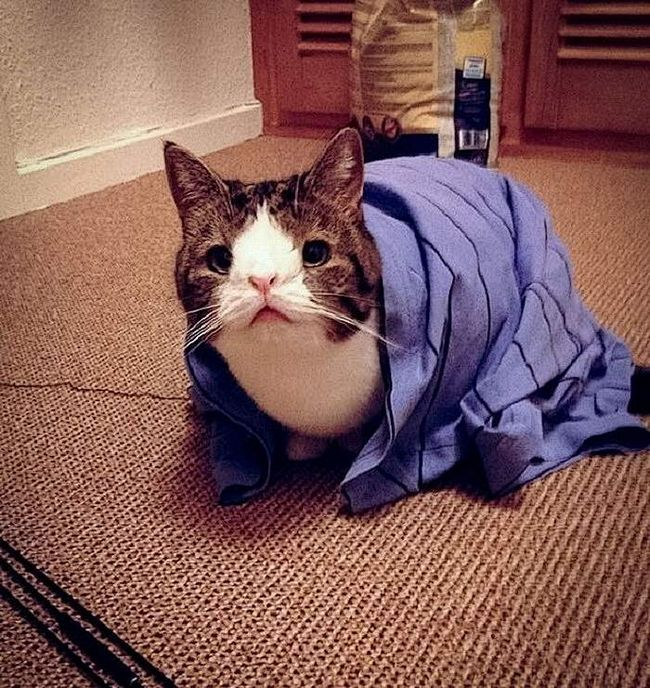 20 Найвідоміших котів у світі: фото