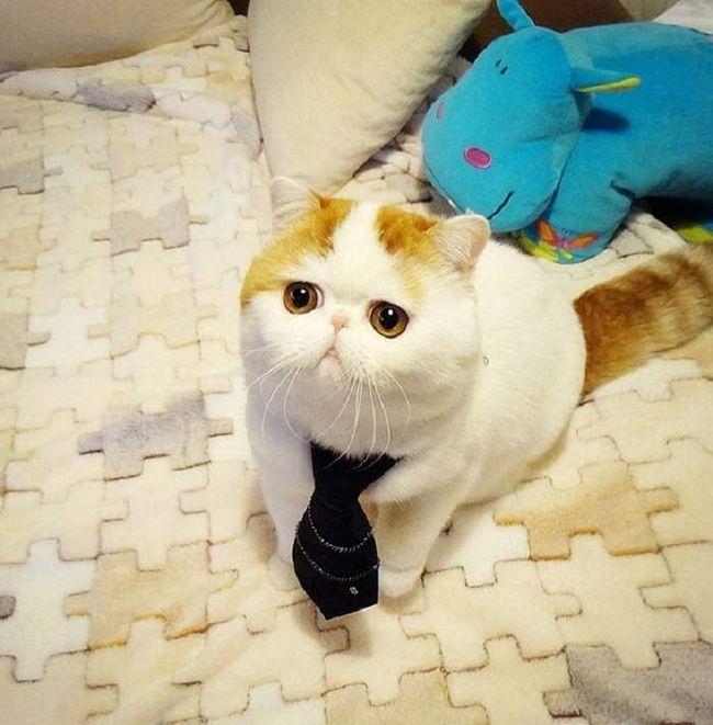 Котик Снупі - миле зачарування.
