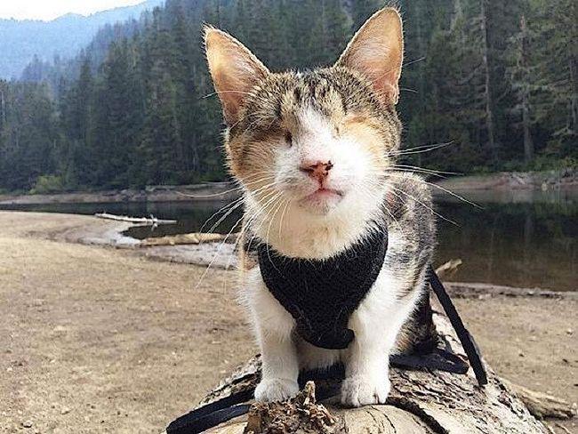 Ця кішка позбавлена   звичайного зору, але вона немов відчуває простір навколо себе: Хані Бі завжди впевнено йде вперед. Крім того, ця кішка знаменита тим, що постійно подорожує зі своїм господарем.