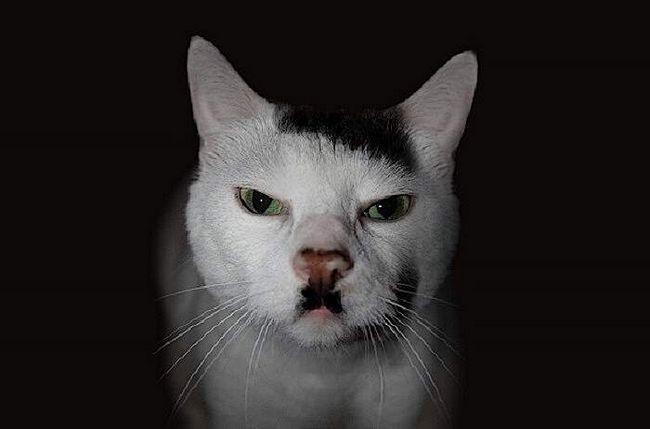 Цей котик, крім