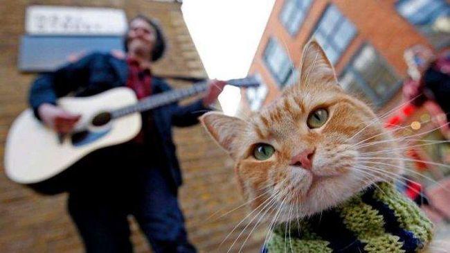 Кот завжди і у всьому підтримує улюбленого господаря.