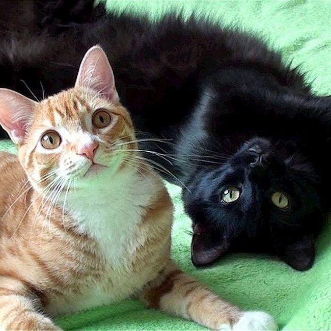 Два котика, дружба яких підкорила користувачів Ютуб.