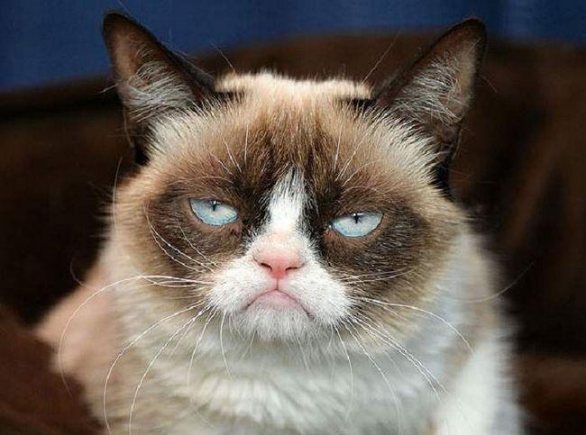 Сердита кішка, так ще величають Grumpy Cat. Ця кішка вже давно стала мільйонеркою, завдяки своїй незвичайній зовнішності.