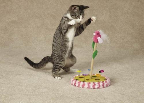 5 секретів щасливого сімейного кішки