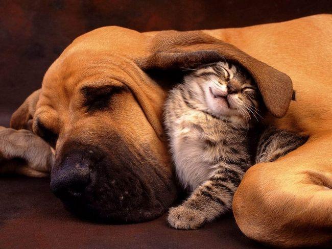 8 Способів, щоб допомогти собакам і кішкам жити дружно в одному будинку