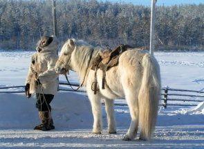 Аборигенні конячки: надійні помічники в суворих регіонах