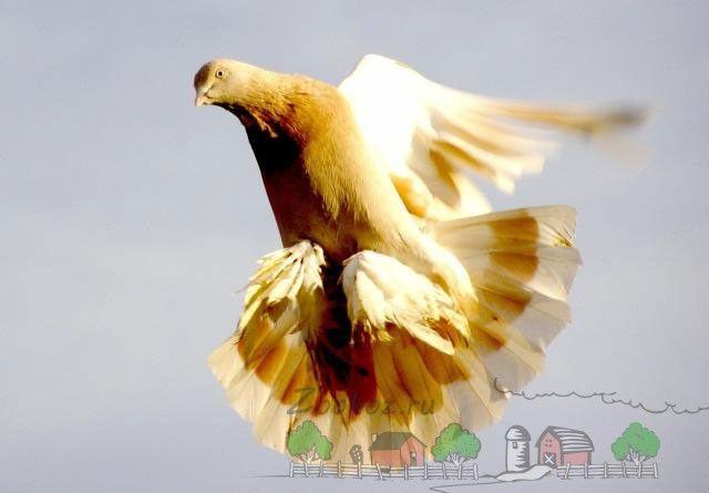 Фото агаран в польоті