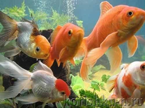 Акваріум новачка: гинуть рибки від невірного запуску акваріума, терміново виправляємо ситуцию