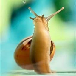 Акваріумні равлики: види, харчування, захворювання. Для чого потрібні равлики в акваріумі?