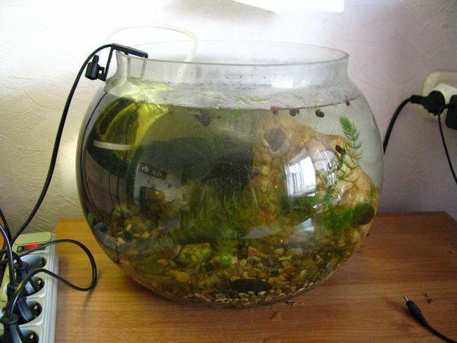Акваріумний компресор - подаруємо рибкам кисень!