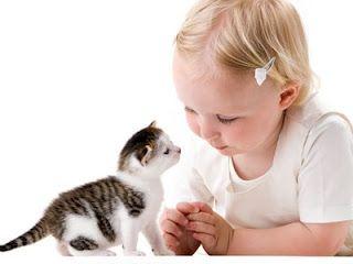 Алергія на шерсть кішки
