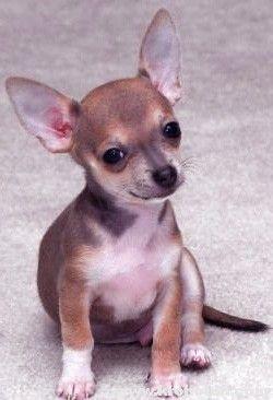Алергія на собаку - не вирок