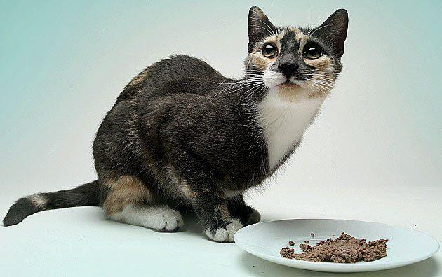 Алергія у кішки