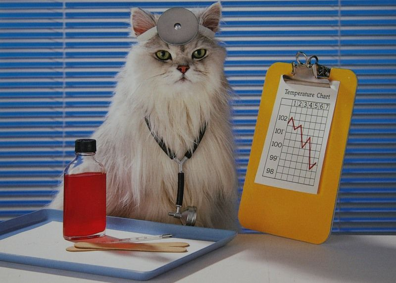 кішка лікар