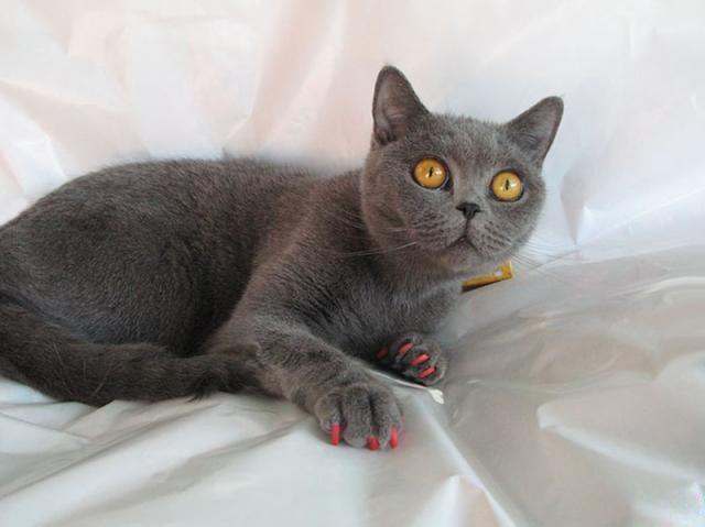 Кішка з антіцарапкамі