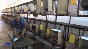 Автогодівниці для кроликів 3,5 л .: продаж, ціна в Івано-Франківській області, Кролик Плюс
