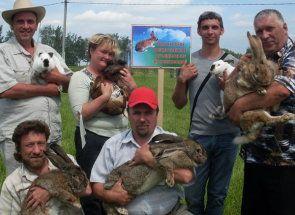 Білоруське кролівництво: як живеться кроликам в республіці?