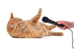 Бесіди з кішкою