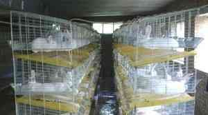 облаштована клітина для кроликів