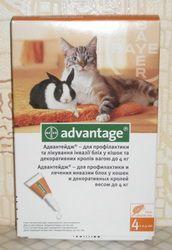 Блохи у кішок: як від них позбутися