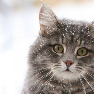 Більше 70 кішок брали участь на виставці в Читі