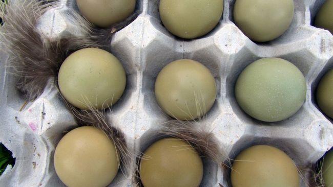 Фазанів яйця в паперовому лотку