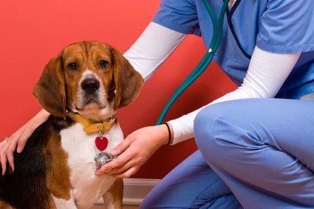 визначення причини неприємного запаху у собаки