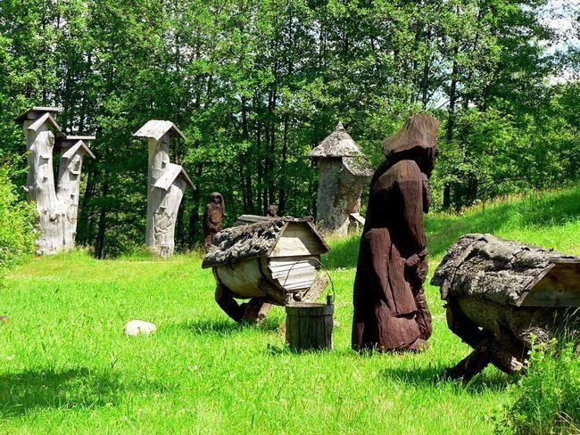 Пасіка бортевого бджільництва