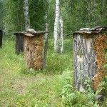 Розставлені в лісі борті