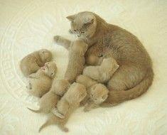 Кішка годує маленьких кошенят
