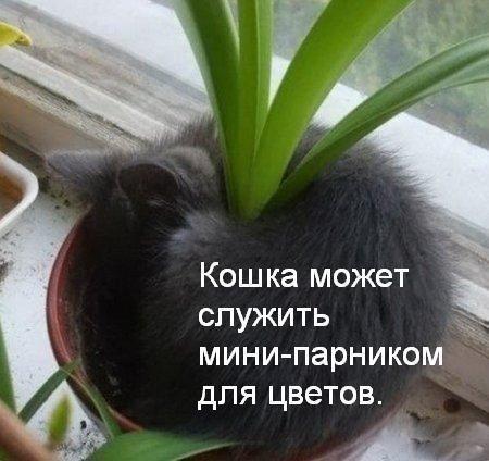 Користь від кішки