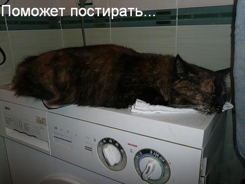 Яку користь приносить кішка