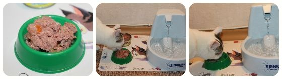 Berkley консервований корм для кішок