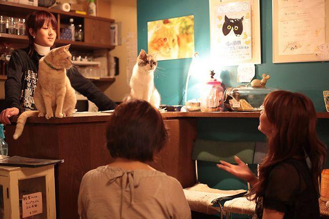 Кафе з кішками
