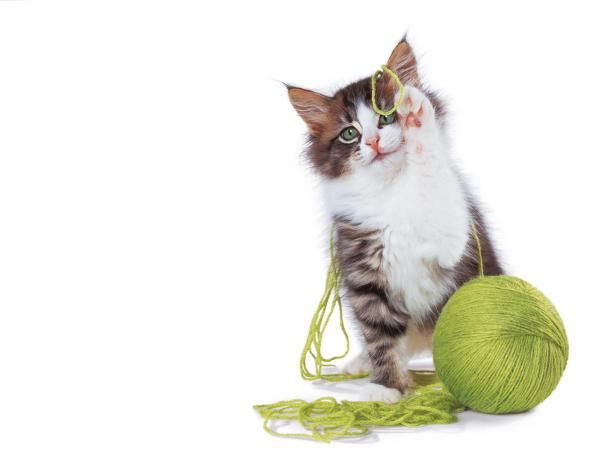 Іграшки для британського кошеня