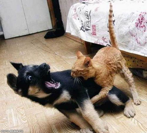 Картинки по запиту Забавні картинки з кішками