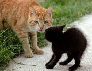 Чого боїться кішка або котяча ксенофобія