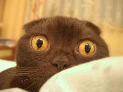 Ксенофобія у кішок