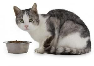 Чим годувати вагітну кішку