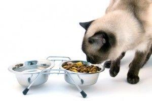 Чим годувати кішку
