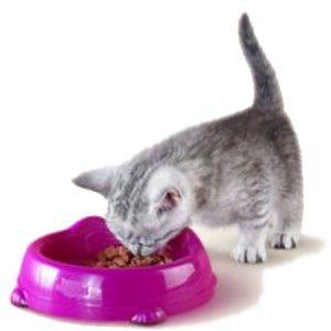 Чим годувати маленького кошеняти