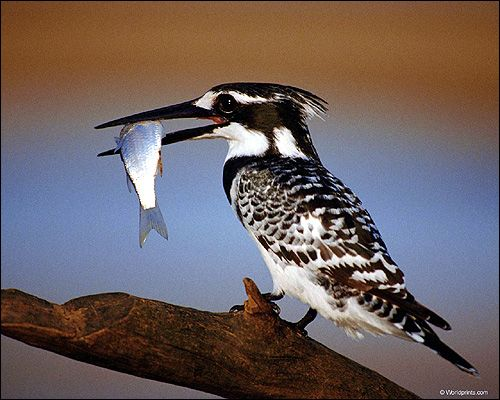 Чим харчуються птахи?