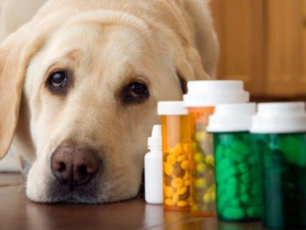 Собака лежить біля баночок з ліками