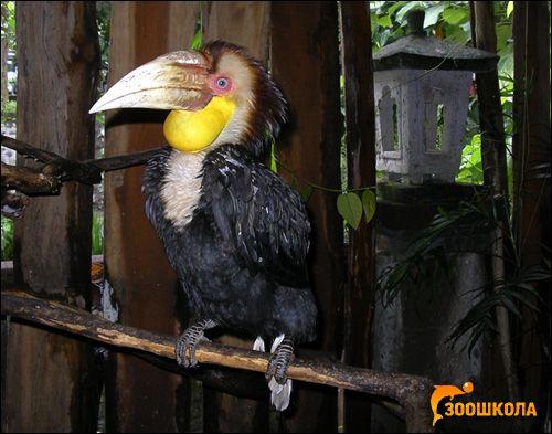 Чим птахи відрізняються від інших тварин?