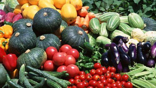 Вирощування овочів на продаж
