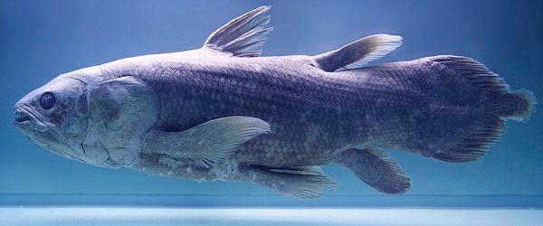 Число видів тварин і їх розміщення на землі