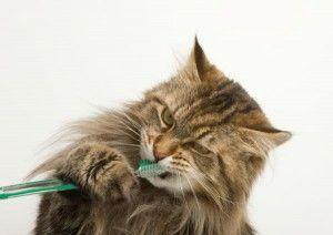 Чистимо кішці зуби